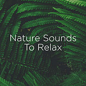 Nature Sounds To Relax de Nature Sounds Nature Music (1)