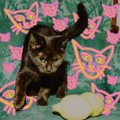 Drop It Like It's Pop (Alcopop! Records Sampler 2019) von Dream Nails, DZ Deathrays, Ditz, Nelson Can, Gaffa Tape Sandy, Art Brut, Best Ex, itoldyouiwouldeatyou, False Advertising, Raketkanon, Cheerbleederz, The Spook School