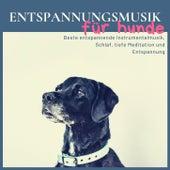 Entspannungsmusik für Hunde: Beste entspannende Instrumentalmusik, Schlaf, tiefe Meditation und Entspannung von Entspannungsmusik