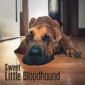 Sweet Little Bloodhound von Sweet Little Bloodhound