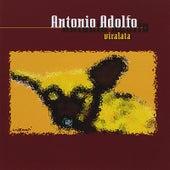 Viralata de Antonio Adolfo