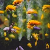 Fish von Izimk