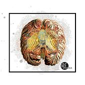 Animal Brain by The Big Payback