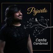Canta Cardenal de Pajarito