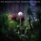 Entering the Woods de Emil Brandqvist Trio
