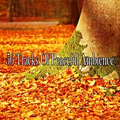 56 Tracks of Peaceful Ambience by Massage Therapy Music