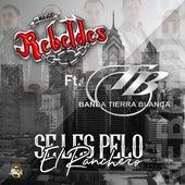 Se Les Pelo el Ranchero by Los Nuevos Rebeldes