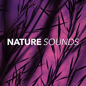 Nature Sounds by Nature Sounds (1)