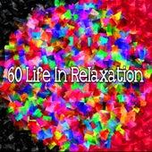 60 Life in Relaxation de Meditación Música Ambiente