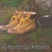 40 Harmonious Ambience de Yoga Tribe