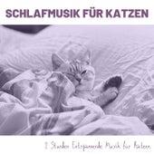 Schlafmusik für Katzen: 2 Stunden Entspannende Musik für Katzen von Entspannungsmusik Dream