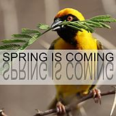 Spring Is Coming by Bird Sounds