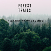 Forest Trails, Relaxing Nature Sounds by Nature Sounds (1)