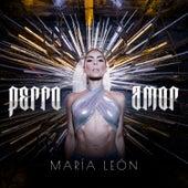 Perro Amor de María León