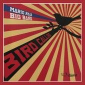 Bird Calling by Mario Raja Big Bang