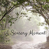 A Sensory Moment de Deep Rain Sampling
