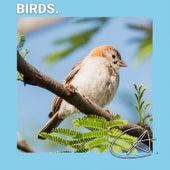 Best Sounds of Birds de Meditation Zen Master