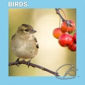 Natural Sounds of Birds by Bird Sounds
