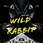 Wild Rabbit by David Diaz