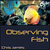 Observing Fish by Chris James