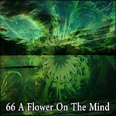66 A Flower on the Mind by Meditation (1)