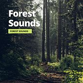 Forest Sounds by Sleep Atmospheres