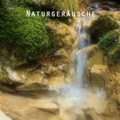 Naturgeräusche und Nature Entspannungsmusik für Meditation, Mentales Training, Autogenes Training, Transzendentale Meditation und Yoga by Entspannungsmusik Akademie