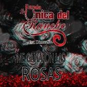 Me Ganaron las Rosas de Banda la Única del Rancho