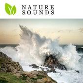 Nature Sounds von Nature Sounds (1)