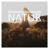 Entspannungsmusik Natur: Leise Musik zum Entspannen Meditationsmusik Yoga von Entspannungsmusik Dream