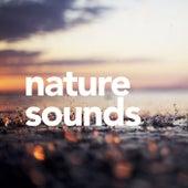 Nature Sounds de Sounds Of Nature