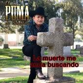 La Muerte Me Anda Buscando de El Puma De Sinaloa