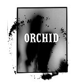 Orchid by Miss June