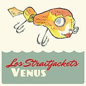 Venus by Los Straitjackets