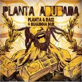 Planta Adubada (Buguinha Dub Remix) de Planta E Raiz