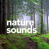 Sounds Nature de Sounds Of Nature