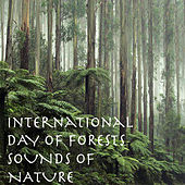 International Day Of Forests Sounds Of Nature by Various Artists