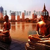 68 Study Day Sounds de White Noise Therapy (1)