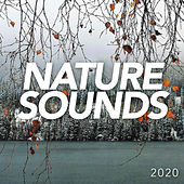 Nature Sounds 2020 by Nature Sounds (1)