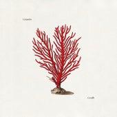Corallo di Colombre