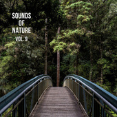 Nature Sounds Vol. 9, Nature Music to Sleep by Nature Sounds (1)
