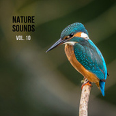 Nature Sounds Vol. 10, Nature Music to Sleep by Nature Sounds (1)