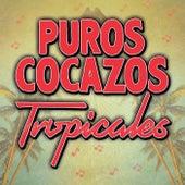 Puros Cocazos Tropicales de Various Artists