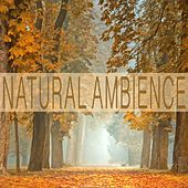 Natural Ambience by Bird Sounds