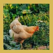 Little Red Hen von ASMR Billy