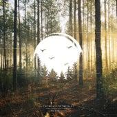 The Woods Between Us de Matt Tondut