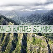 Wild Nature Sounds by Bird Sounds