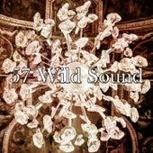 57 Wild Sound de Dormir
