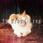31 Storm Life by Rain Sounds and White Noise