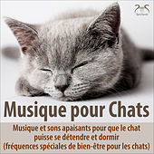 Musique pour chats - Musique et sons apaisants pour que le chat puisse se détendre et dormir (fréquences spéciales de bien-être pour les chats) von Musique pour chats TA